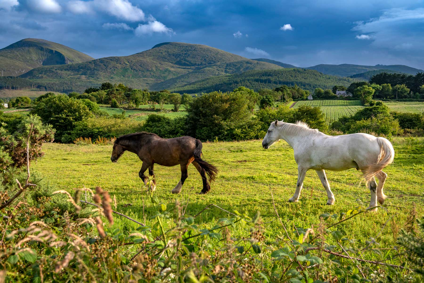 Nr Castlewellan, County Down