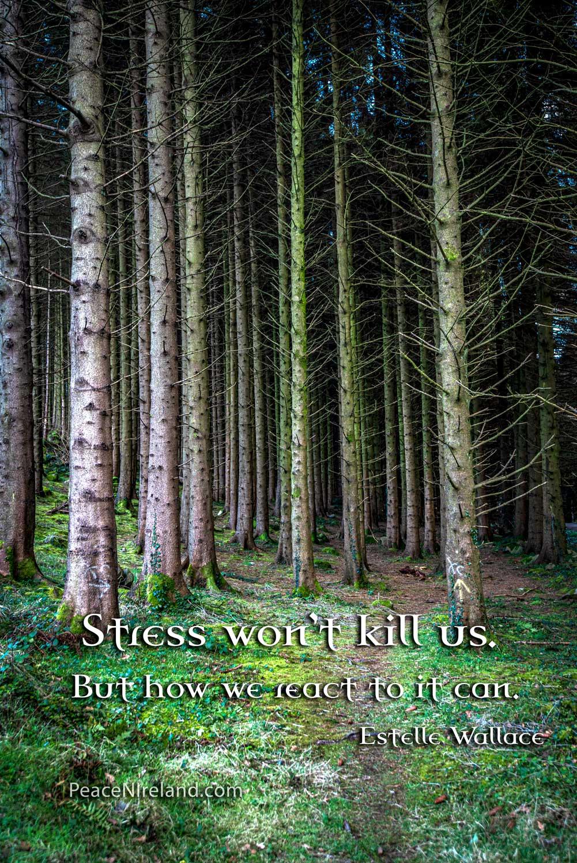 Castlewellan Forest 1